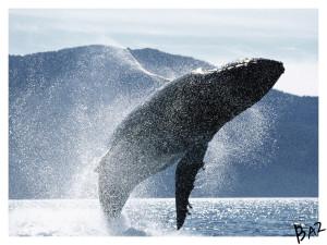 Whale_by_basgitaar