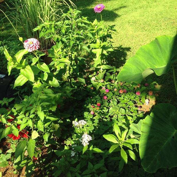 summer-garden2