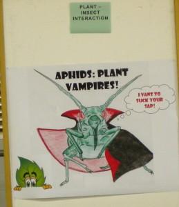 aphids: plant vampires