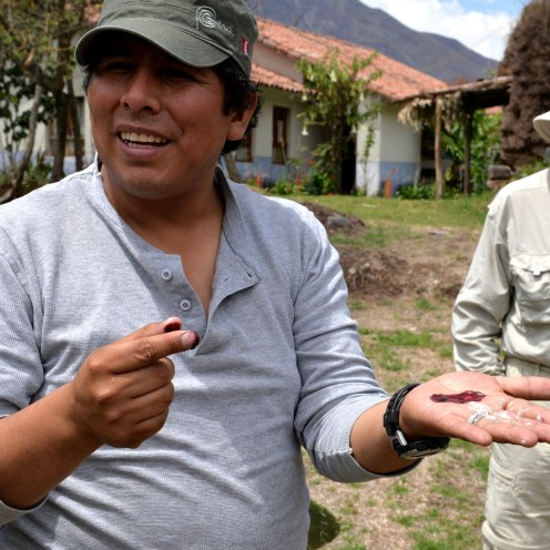 Our guide, Felix, showing us how the white fungus changes to red.