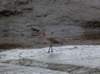Vogel in der Tyne