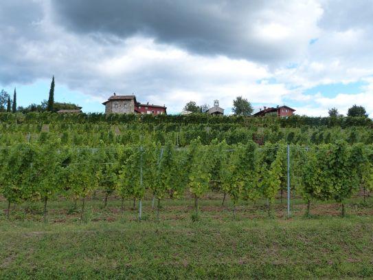 Das Weingut Comelli - wir wohnten in dem ganz linken Steinhaus