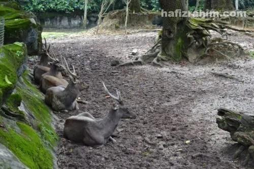 zoo taiping4