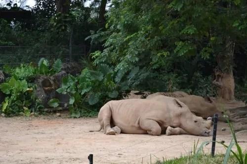Badak Sumbu Zoo Negara