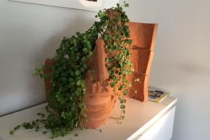 Keramikkruka med grön växt.