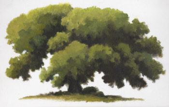 tree illustration by William Hagerman copyright 2013
