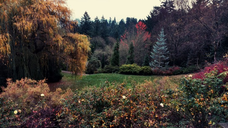 Beautiful fall color outside the grounds of the Portland Japanese Garden in Oregon. Love the Pacific Northwest! Photo by Natalie Murray.
