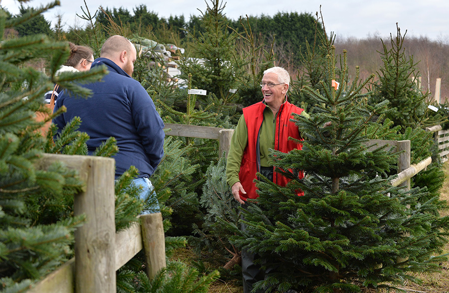 Hagley Christmas Trees. 3rd December 2016.
