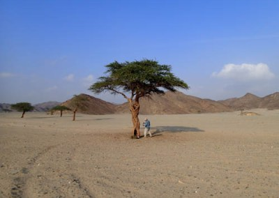 The Egypt Expedition: Dendrochronology