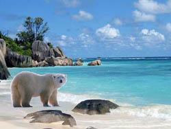 Polar Bear on Tropical Island