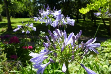 Fleurs et parc arboré