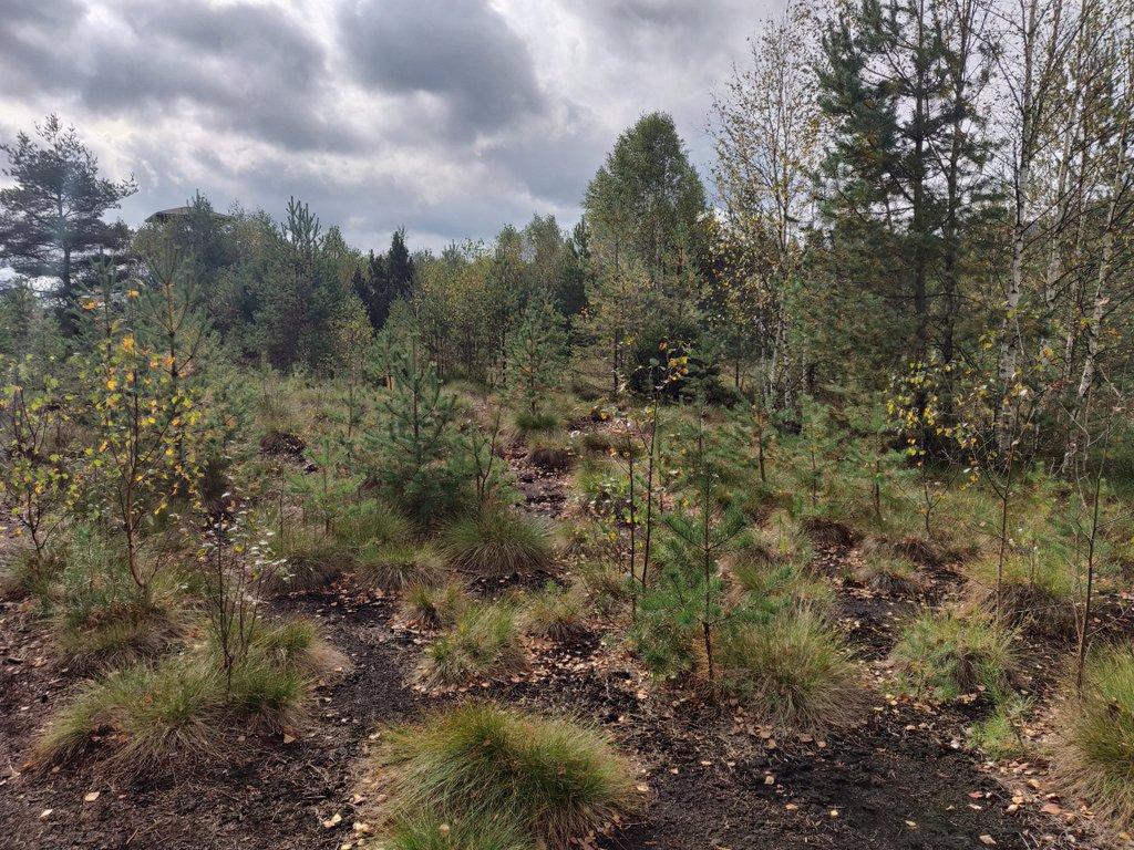 Das Säumermoor im Nationalpark Šumava