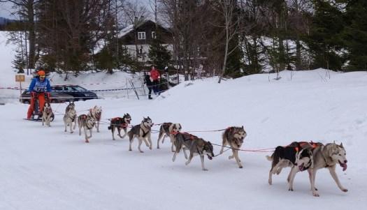 Siberian Huskies: Sind wir schon da?