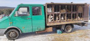 Siberian Huskies: Teraz mamy długą drogę