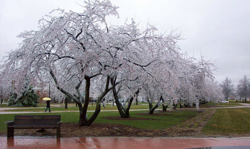 icicle trees