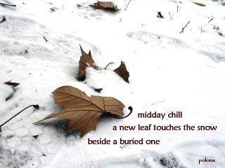 leaf and snow by PolonaOblak