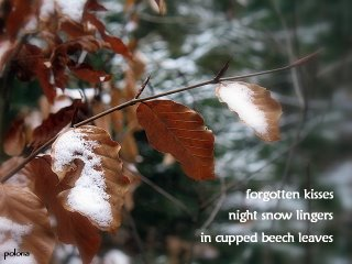 snowonbeech-by-polona.jpg