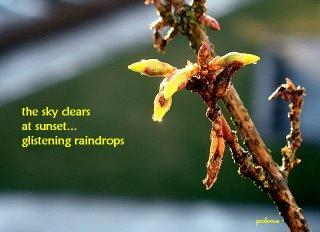 Raindrops by PolonaOblak