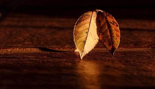 秋の季語『秋の声』