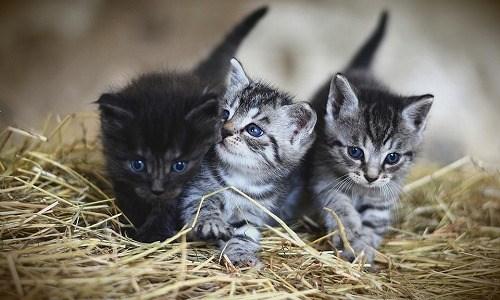 春の季語『子猫』『猫の子』