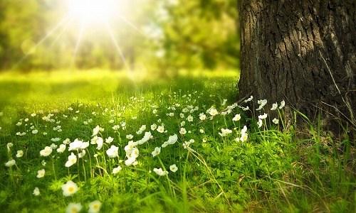 春の俳句の作り方