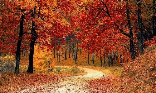秋の俳句の作り方