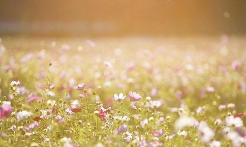 秋の季語『花野』