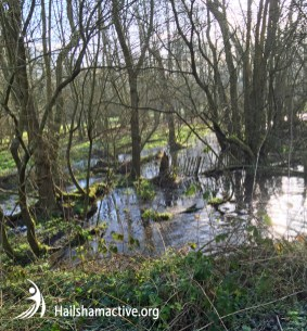 Cuckoo Trail water