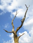 carved tree top M.M