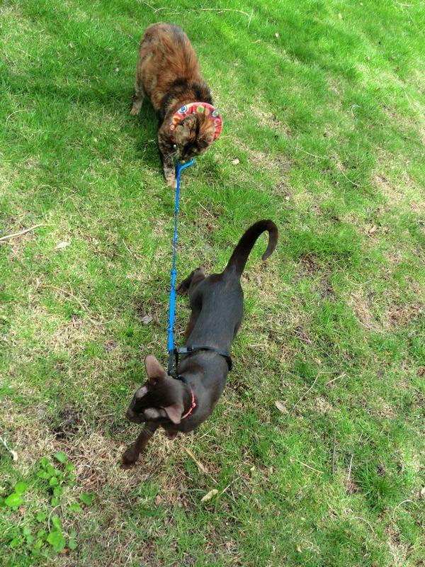leash2