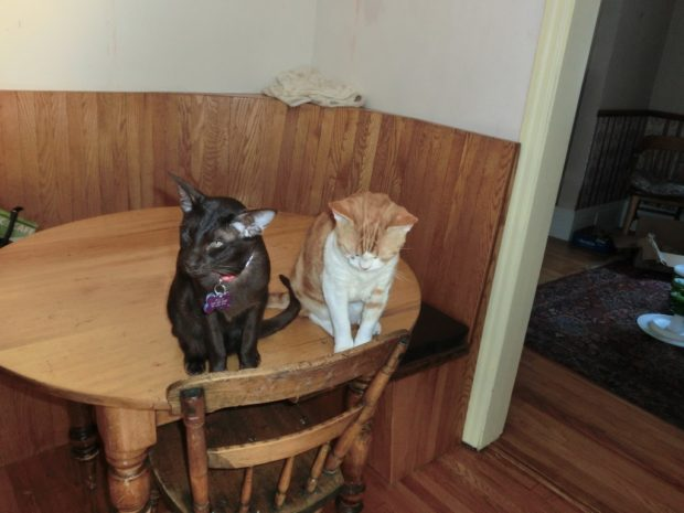 house-rules-off-the-table