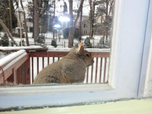 suspectsquirrel