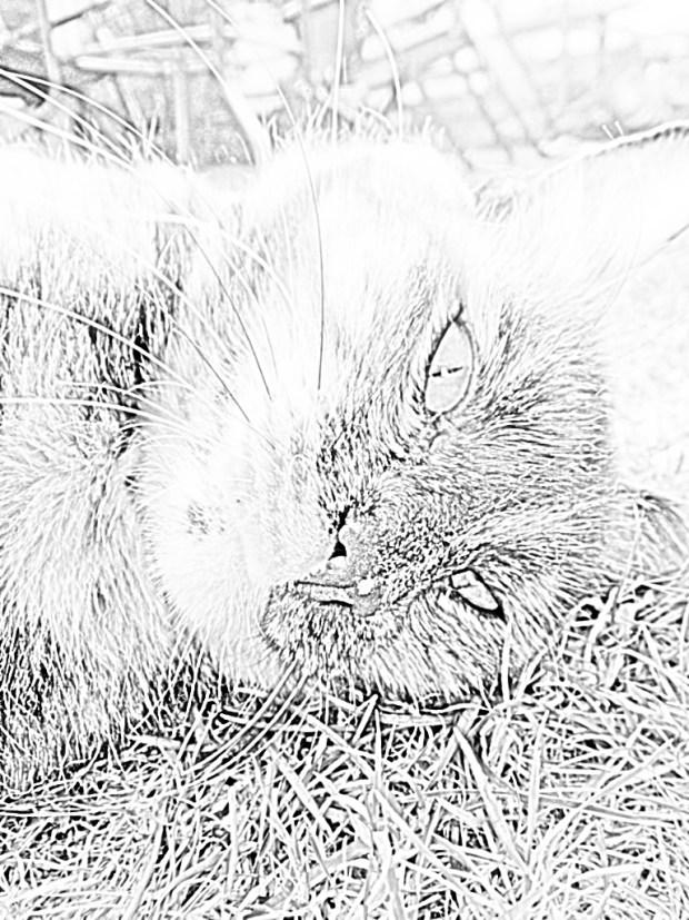 caturday-national-cat-day-amarula-art