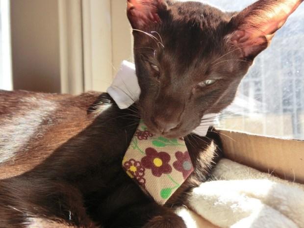 sunday-selie-zulu-meow