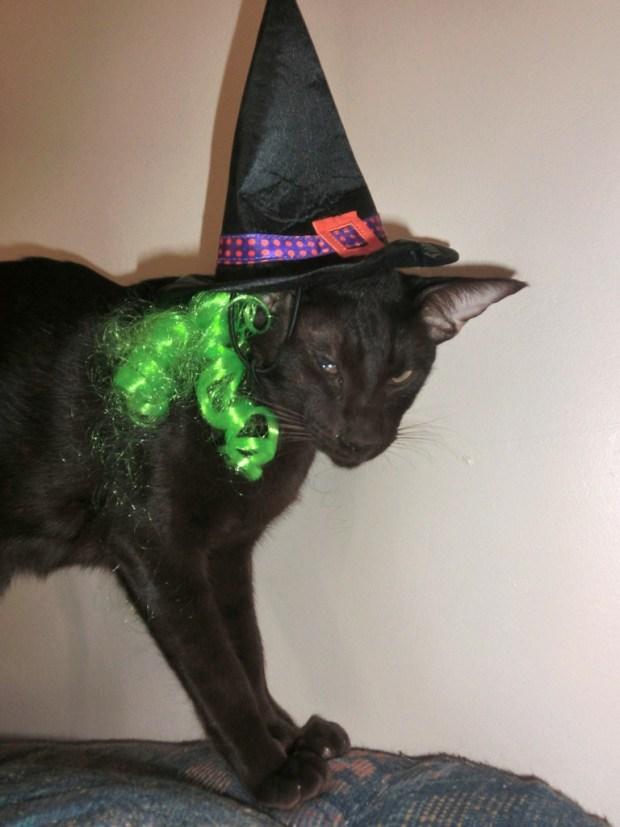 zulu-halloween