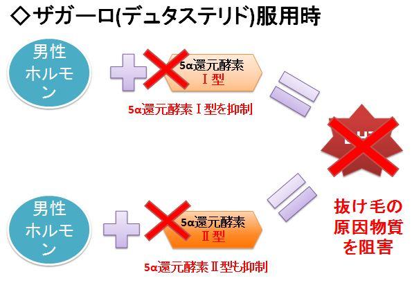 ザガーロの抜け毛防止効果のメカニズム解説図