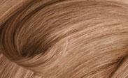 Hair Color Chart: Medium Champagne