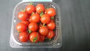 ミニトマトS