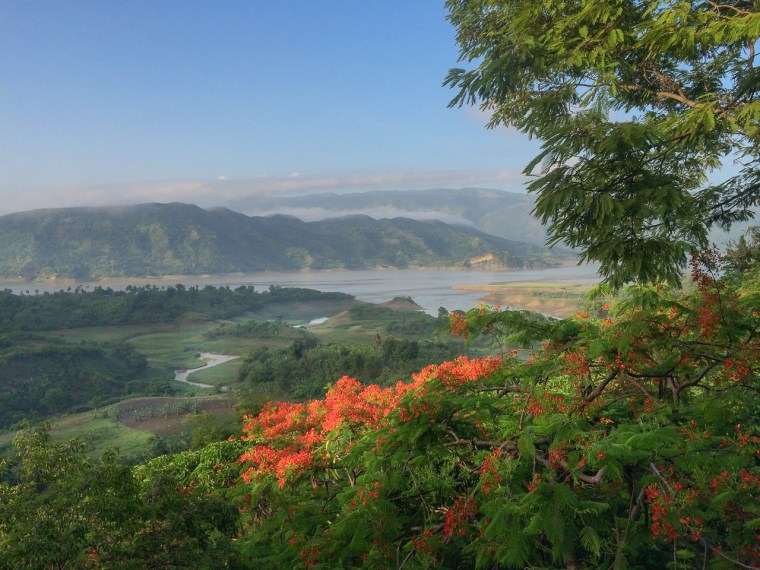 In May, the flamboyant or flame tree (Delonix regia) ignites the canopy surrounding the Peligre reservoir in Haiti's Central Plateau.