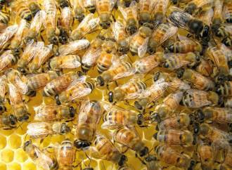 Tout savoir sur l'abeille