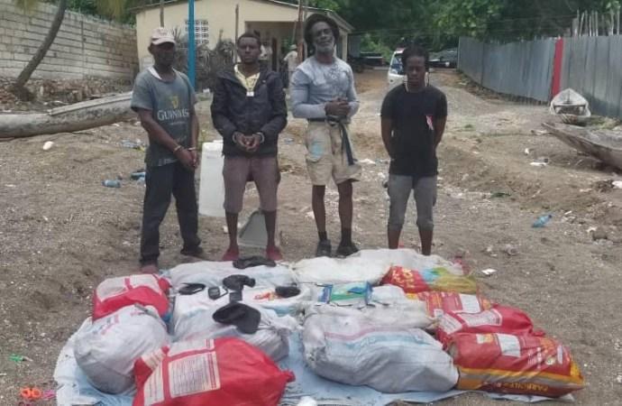 4 Jamaïcains arrêtés en possession de 174,77 kg de Marijuana à Petite rivières des Nippes