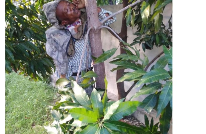 Aquin : un greffier retrouvé pendu à un arbre dans la cours du tribunal de paix