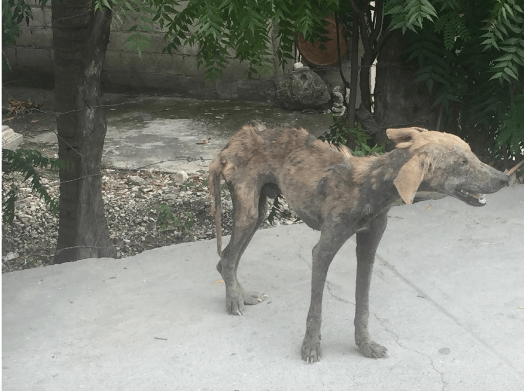 Haiti: Dog Eat Dog World