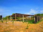 st ignatius high school. region 9 guyana - shade house vegetable cultivation