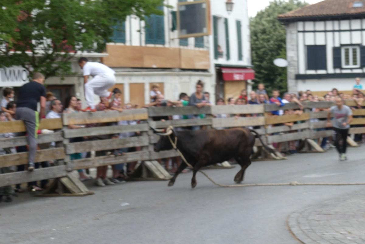 Fêtes Hasparren-Course de vache