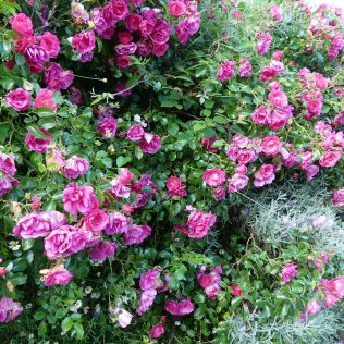 Jardin Ortillopitz