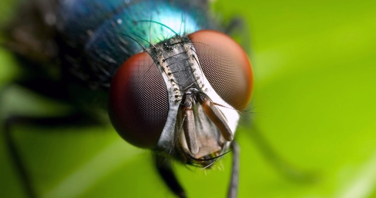Bir sinekle münazara