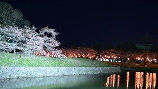 【4/25~5/17】函館公園・五稜郭公園の夜間電飾、函館公園露店(屋台)出店
