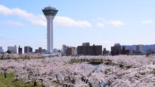 【2017年版】函館と周辺の定番・穴場お花見スポットまとめ