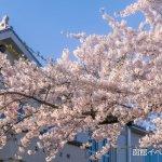 2016年・桜満開の函館公園&五稜郭写真集